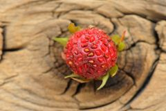 One wild strawberry Fragaria viridis on cracked wooden board Royalty Free Stock Images