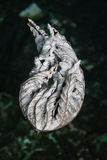 One withered leaf. Stock Photo