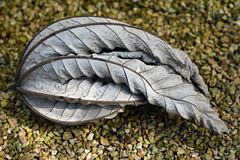 One withered leaf. Royalty Free Stock Image