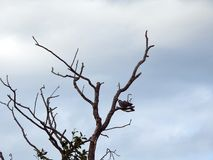 Old tree and bird on branch, Lithuania Royalty Free Stock Photos