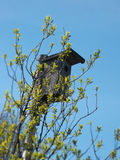 One wooden old birdhouse on a tree in the spring Royalty Free Stock Images