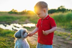 Child feeding dog Royalty Free Stock Photos