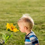 One year old baby boy looking at sunflower Stock Photography