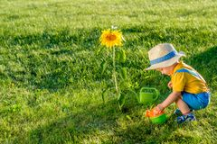 One year old baby boy using watering can for sunflower Stock Photo