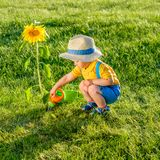 One year old baby boy using watering can for sunflower Stock Photography