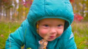 One year old boy crawls along the autumn park. gimbal stock video footage