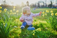 One year old girl sitting on the grass with yellow narcissi. Toddler looking at flowers on a spring day in park. Adorable little kid exploring nature stock image