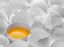 One yelk in broken egg shell Stock Photography