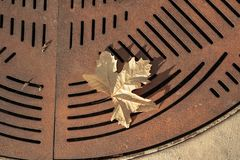 One yellow autumn leaf fallen onto rusty metal street grate abstract pattern background. Close up detail of one yellow autumn leaf fallen onto rusty metal street royalty free stock image