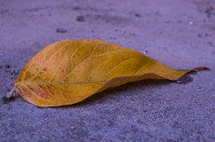 One yellow autumn leaf lying on the asphalt. One yellow autumn leaf lying on the asphalt, closeup royalty free stock photos
