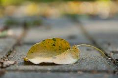 one yellow autumn leaf Royalty Free Stock Photo