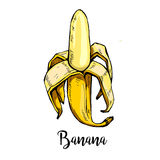 One yellow banana with an inscription, graphics on a white background. Element for design, print t-shirt. Vector illustration Stock Images
