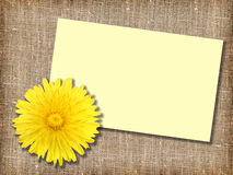 One yellow dandelion-flower with message-card Royalty Free Stock Photos