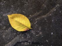 One yellow dry leaf fallen on the floor Royalty Free Stock Images