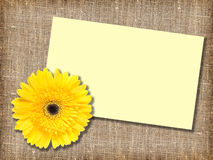 One yellow flower with message-card Stock Photos