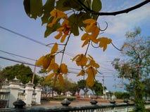 Yellow flowers at Phra Samut Chedi Royalty Free Stock Photo