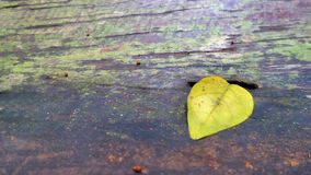 One yellow leaf falling on wooden floor Stock Images