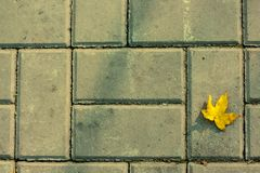 Yellow leaf on the brick road. One Yellow leaf on the grey brick road royalty free stock photos