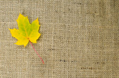 One yellow maple leaf at burlap Royalty Free Stock Photo