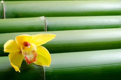 One yellow orchid on bamboo Royalty Free Stock Images