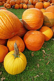 One yellow pumpkin Royalty Free Stock Image