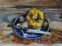 One yellow ripe quince on the blue plate on rustic wooden plank Royalty Free Stock Photography