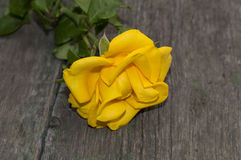 One yellow rose on a wooden background Stock Photography