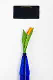 One yellow tulip in blue vase and chalk board for notes isolated Royalty Free Stock Image