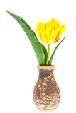 One yellow tulip in vase Stock Image
