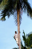 One young African man is on top of coconut tree. Zanzibar, Tanzania - February 18, 2008: One unknown young African man, approximate age 25-30 years is on top of Royalty Free Stock Image