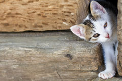 Free One Young Cute Cat Stock Photography - 38383192