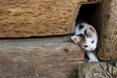 One young cute cat Stock Photos