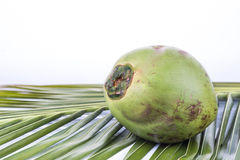 One young and juicy organic green coconut on palm leaf Royalty Free Stock Photography