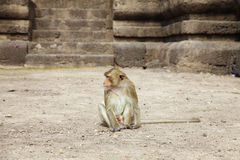 One young monkey Royalty Free Stock Photos
