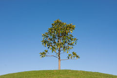 One young tree on a green hill Stock Photo