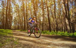 One young woman - cyclist in a helmet riding a mountain bike outside the city. On the road in a pine forest on a summer day Royalty Free Stock Photography