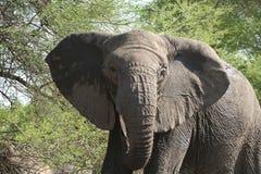 Onechte het laden olifant Royalty-vrije Stock Afbeeldingen