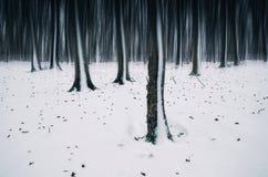 Oneindig de winterbos met sneeuw stock fotografie