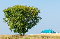 onely albero Campo di grano Fotografia Stock