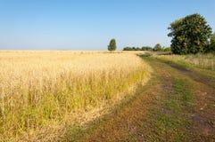 onely albero Campo di grano Immagine Stock Libera da Diritti