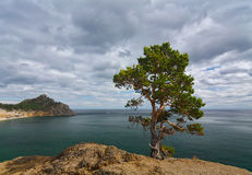Lone Pine over Baikal Stock Photos