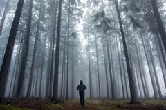 Oneman in the foggy autumn forest. Stock Images