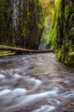 Oneonta峡谷足迹在哥伦比亚河峡谷,俄勒冈 图库摄影