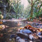 Oneonta Gorge. Fall colors and fallen leaves in the stream at Oneonta in the Columbia Gorge Oregon Royalty Free Stock Photo