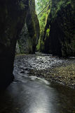 Oneonta Gorge in Oregon Royalty Free Stock Image