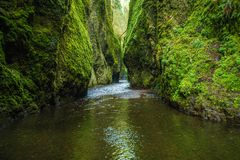 Oneonta Gorge in Oregon. Mossy Scenic Oneonta Gorge in Oregon, United States Stock Photo