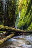 Oneonta gorge trail in Columbia river gorge, Oregon Stock Photo