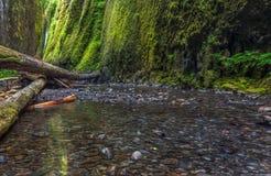 Oneonta gorge trail in Columbia river gorge, Oregon. Stock Photos