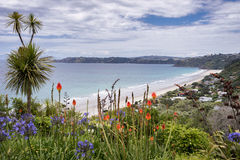 Onetangi strand, Waiheke ö Arkivbild