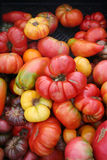Oneven gevormde tomaten Royalty-vrije Stock Fotografie